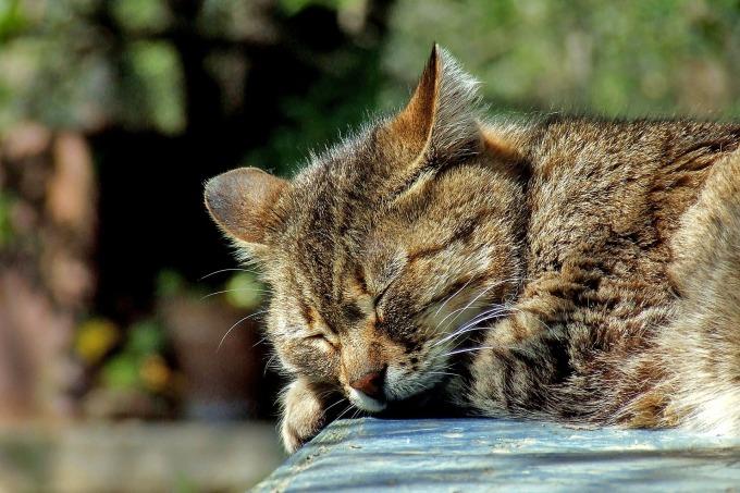 cat-590684_1920